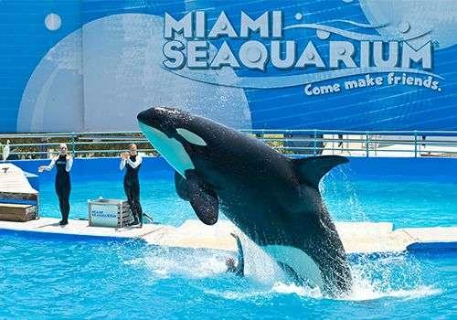 Miami Seaquarium se otvara za posetioce od 20. juna