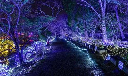 The NightGarden at Fairchild Tropical Botanic Garden