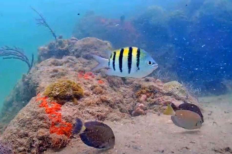 Podvodna veb kamera u Majamiju postala viralni hit