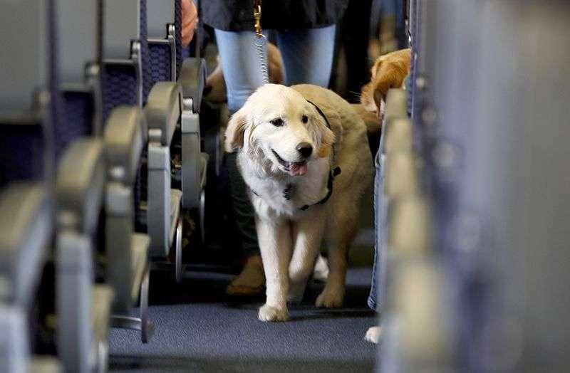 American Airlines zabranio sve životinje na svojim letovima osim servisnih pasa